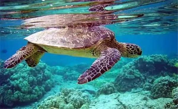 双月湾海龟保护区
